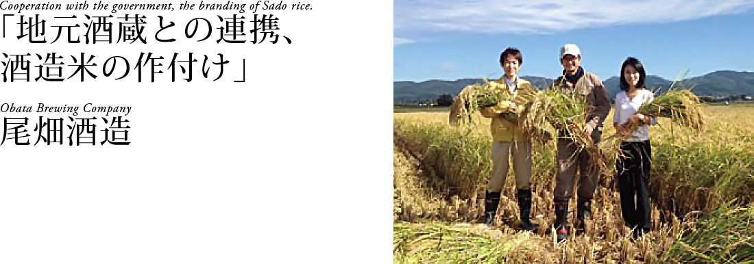 「地元酒蔵との連携、酒造米の作付け」尾畑酒造 Cooperation with the government,the branding of Sado rice. Obata Brewing Company